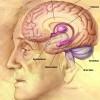 גנטיקה, אלצהיימר, מחלות נפש ואינטליגנציה