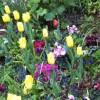 גילוי חדש לגבי המערכת החיסונית של הצמחים